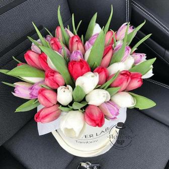 Caja con 60 Tulipanes